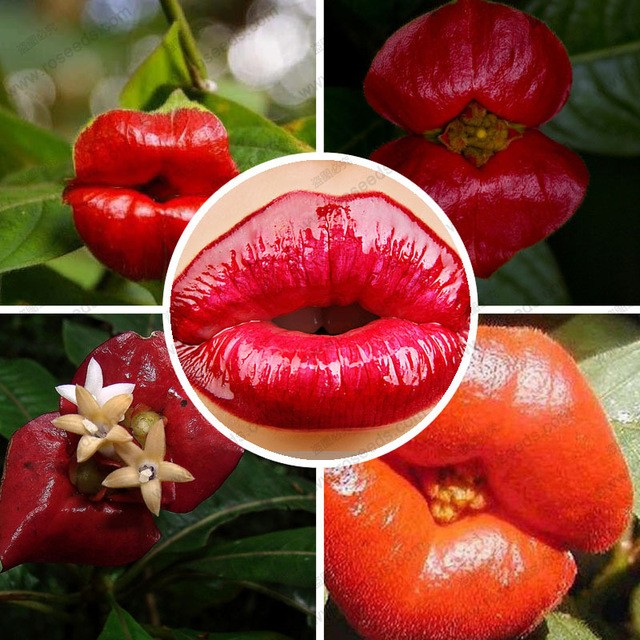 Psychotria has over 2,000 species