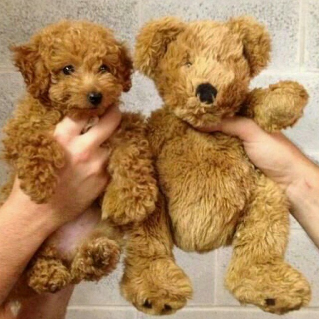 Teddy finds long lost twinnie