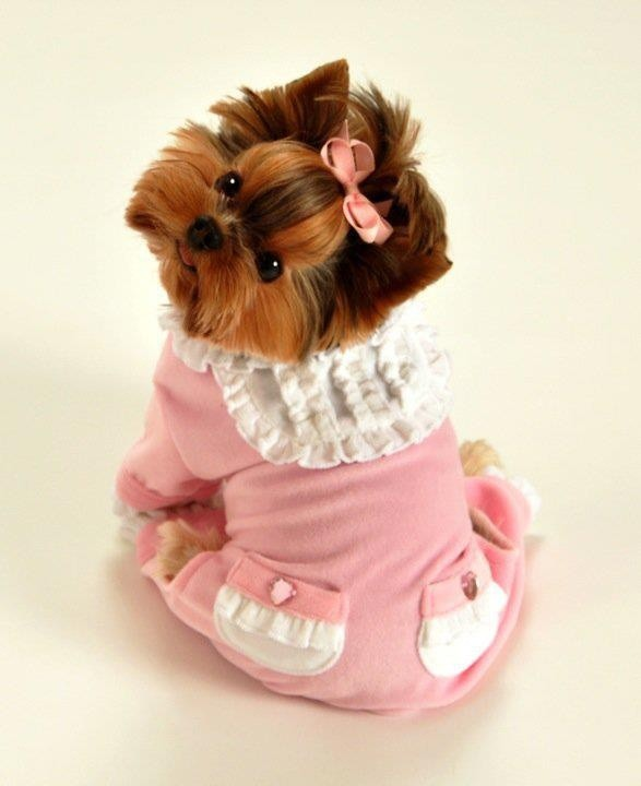 The most girly in pink among lovely teddy bear dogs